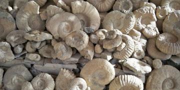 Fasın fosil şehri: Afrud