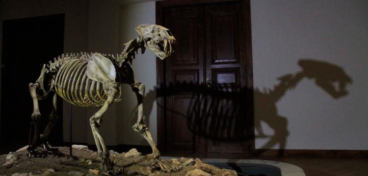 8 milyon yıllık fosiller yeni Çankırı Müzesi'nde