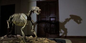 8 milyon yıllık fosiller yeni Çankırı Müzesinde