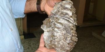 Konyada mamut fosili bulundu