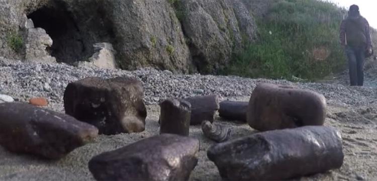 Çanakkale'de milyon yıllık balina ve bizon fosili bulundu