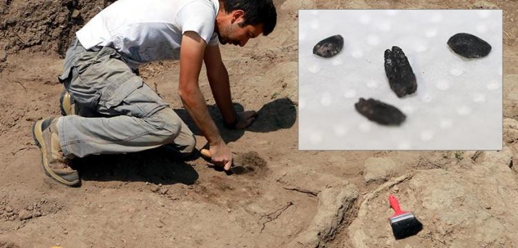 Batı Anadolu'nun en eski tahılı bulundu