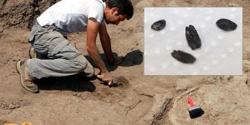Batı Anadolunun en eski tahılı bulundu