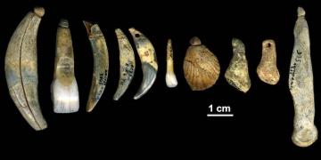 Neandertallerin takı yaptığı doğrulandı