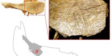 Kuzey Amerikada 24 bin yıl önce de insan varmış