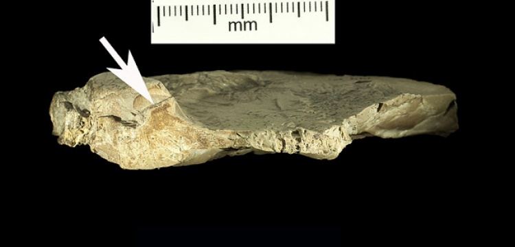 Neandertaller de koleksiyon yapmış olabilir