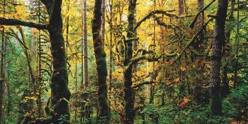 Ormanlarda arkeoloji kazısına izin veren yasa tasarısı kabul edildi