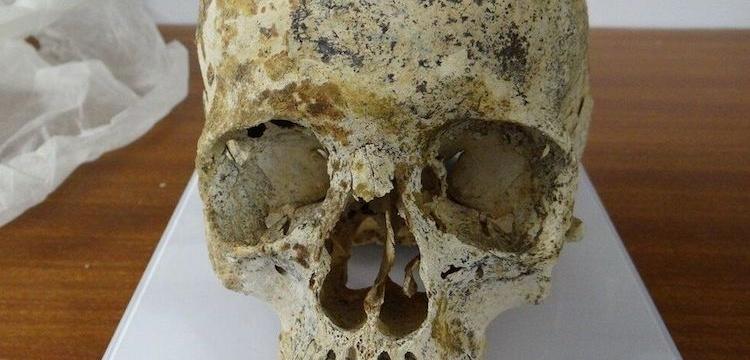 Ava'nın mezarındaki polenler incelendi