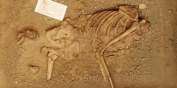 Tuhaf kıyafetli 7 bin yıllık iskelet