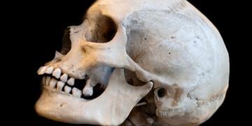 İspanyada 10 bin yıllık yamyamlık izi