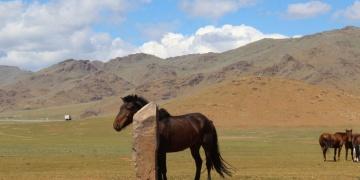 At biniciliğinin tarihi ez az 3.200 yıllık