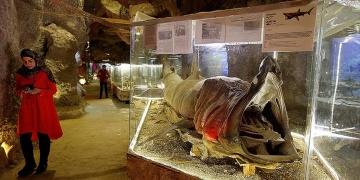 Lübnanda 35 yıllık emeğin ürünü: Deniz Hayatı Müzesi