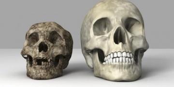 Hobbitler, Homo erectus ailesinden değilmiş