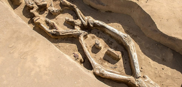 Dans eder gibi gömülen iskelet arkeologları şaşırttı
