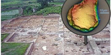 Pirinç 10 Bin yıl önce Çinde evcilleşmiş olabilir