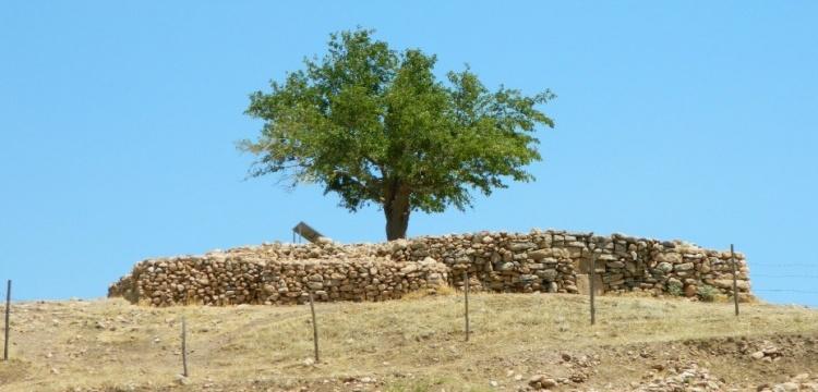 Çiğdem Köksal Schmidt: Göbeklitepe'deki dilek ağacı kuruyor
