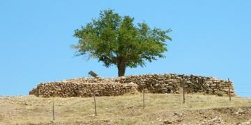 Çiğdem Köksal Schmidt: Göbeklitepedeki dilek ağacı kuruyor