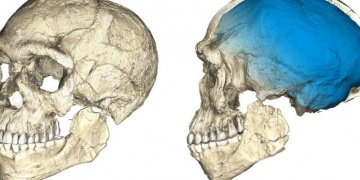 Fasta 300 bin yıllık Homo Sapiens iskeleti bulundu