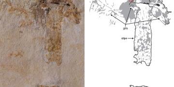 Dünyanın en eski mantar fosili mucizevi şekilde korundu