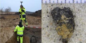 Arkeologlar Bronz Çağından kalma üzüm çekirdeği buldu