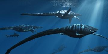 Kalsiyum analizlerine göre deniz dinozorları gıda piramidinin tepesindeydi