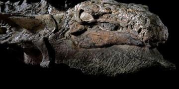 Dünya bu taşlaşmış dinozoru konuşuyor: Nodosaur