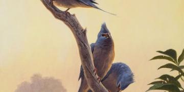 Nesli tükenmiş yeni bir kuş türü keşfedildi