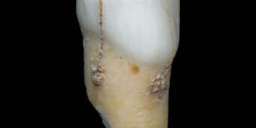 Cebelitarıkta neanderthal dişi bulundu
