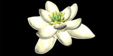 Dünyadaki ilk çiçek böyle görünüyordu iddiası