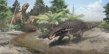 Yürüyen tank Nodosaurun zırhı onu korumaya yetmiyordu