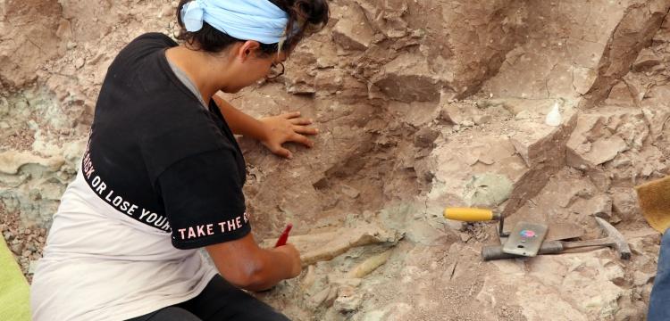 Çankırı'daki Çorak Yerler omurgalı fosil kaynıyor