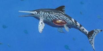 Karnında bebek bulunan ihtiyozor fosili bulundu