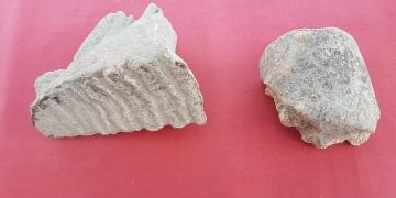 Adanada Asya fili kalıntıları bulundu