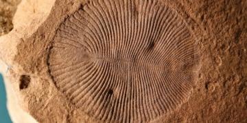 550 milyon yıllık gizemli fosilin hayvan olduğu sanılıyor