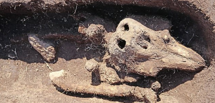Mezarda bulunan yunus balığı arkeologları şaşırttı