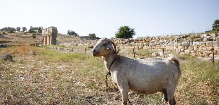 Yeşilköy ve Fırnaz Koyu'nda sit alanı statü değişikliğine itiraz edildi