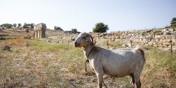 Yeşilköy ve Fırnaz Koyunda sit alanı statü değişikliğine itiraz edildi
