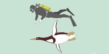 60 milyon yıllık dev penguen fosili bulundu