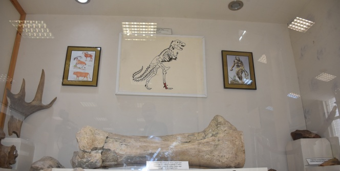 Karsta bulunan dinozor kemiği