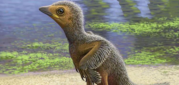 İspanya'da 127 milyon yıllık kuş fosili bulundu