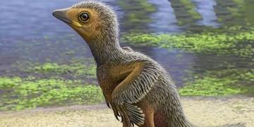 İspanyada 127 milyon yıllık kuş fosili bulundu