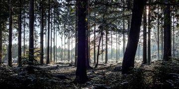 Ormanlarda arkeoji kazısı ve restorasyon yapılabilecek
