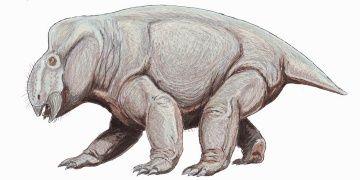 Dicynodontun hayalet izlerinin gerçek olduğu anlaşıldı