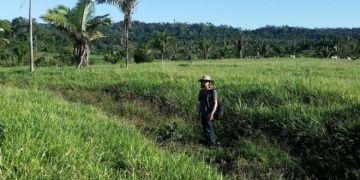 Amazonlarda 3500 yıllık yerleşik yaşam izleri bulundu