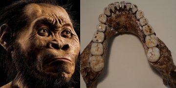 Homo naledi insanımsı türünün besinlerine dair ipuçları