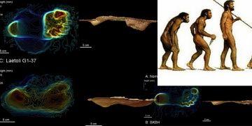 Dik yürüyebilen ilk insanımsı tür Australopithecus olabilir