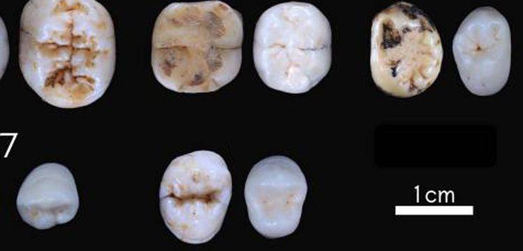 Avrupa'daki Neandertalizasyon varsayımları değişti