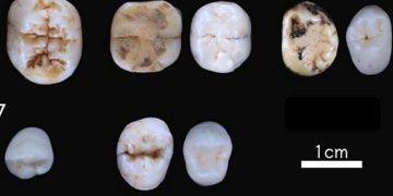 Avrupadaki Neandertalizasyon varsayımları değişti