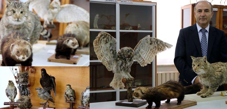 Trakya Biyolojik Çeşitlilik Müzesi açılışa hazırlanıyor