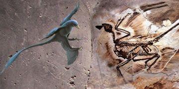 Dünyanın en eski kepek kalıntısı Microraptorların ününü zedeledi